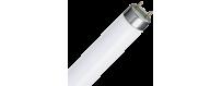 Fluorescents | Electricity | Buy online on Nautichandler